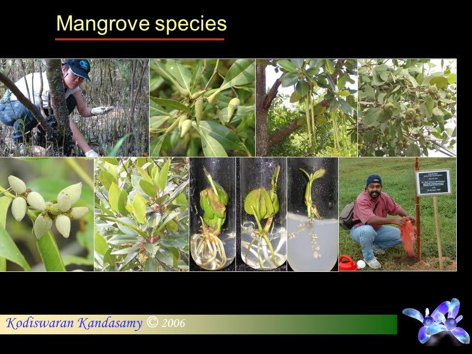 Kodiswaran Kandasamy © 2006 Mangrove species