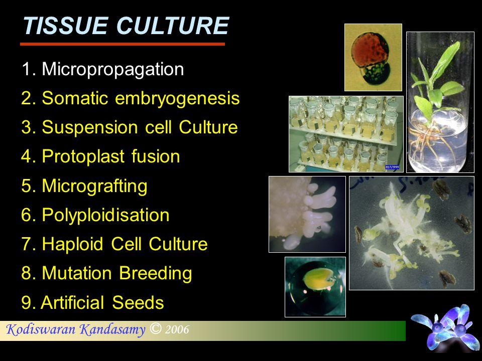 Kodiswaran Kandasamy © 2006 1. Micropropagation 2. Somatic embryogenesis 3. Suspension cell Culture 4. Protoplast fusion 5. Micrografting 6. Polyploid