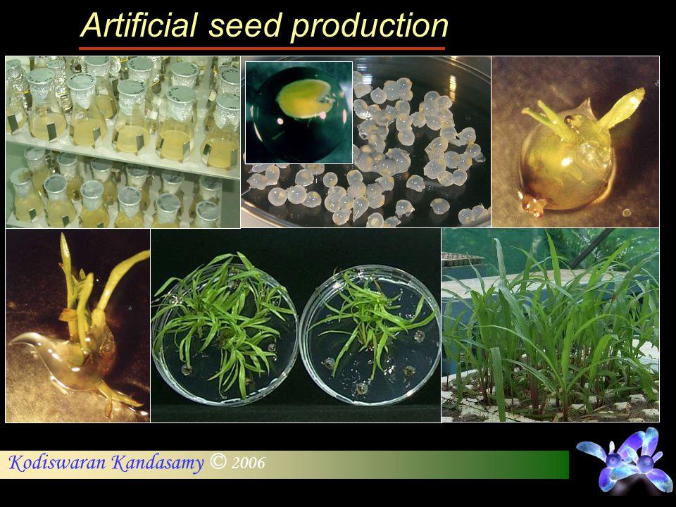 Kodiswaran Kandasamy © 2006 Artificial seed production