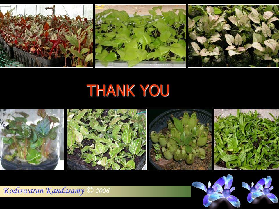 Kodiswaran Kandasamy © 2006 THANK YOU