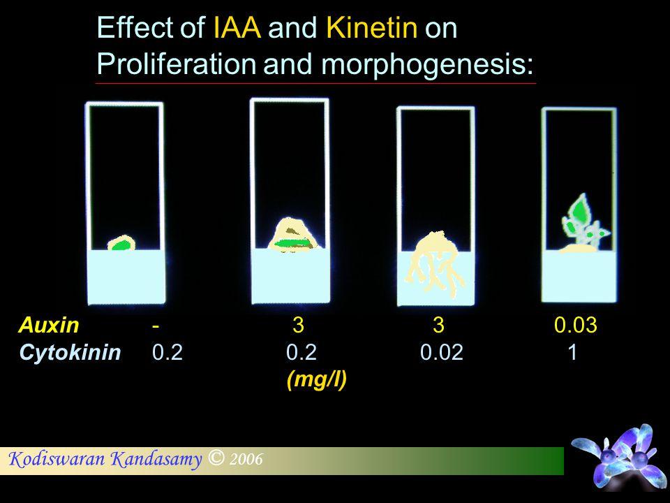 Kodiswaran Kandasamy © 2006 Effect of IAA and Kinetin on Proliferation and morphogenesis: Auxin- 3 30.03 Cytokinin0.20.20.02 1 (mg/l)