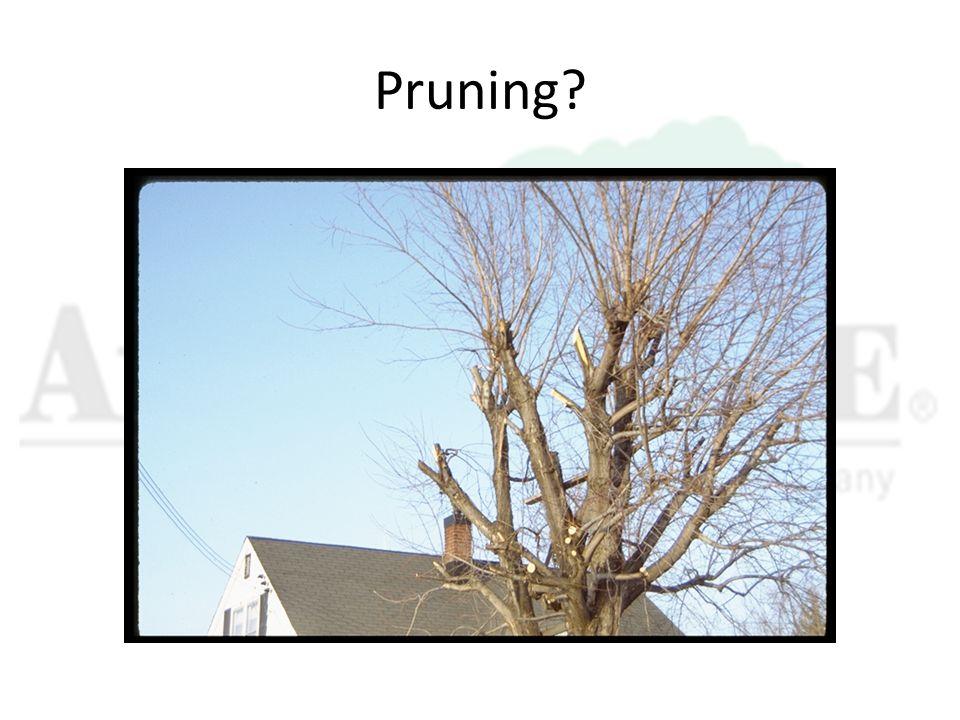 Pruning?
