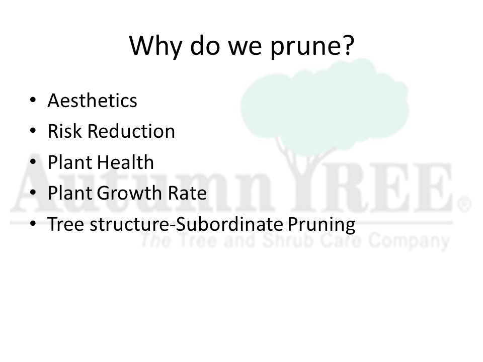 Why do we prune.