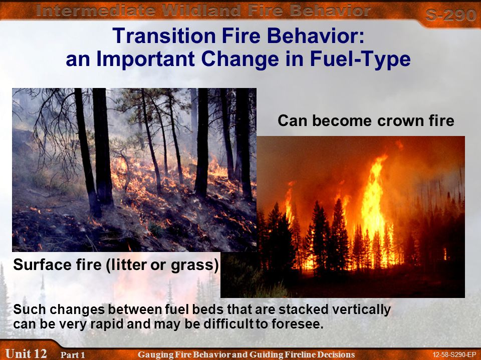 12-58-S290-EP Gauging Fire Behavior and Guiding Fireline Decisions Unit 12 Part 1 Transition Fire Behavior: an Important Change in Fuel-Type Can become crown fire Such changes between fuel beds that are stacked vertically can be very rapid and may be difficult to foresee.