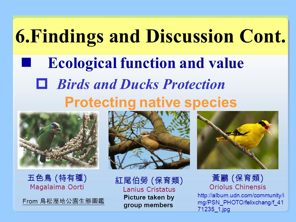 Ecological function and value  Birds and Ducks Protection Protecting native species 6.Findings and Discussion Cont.
