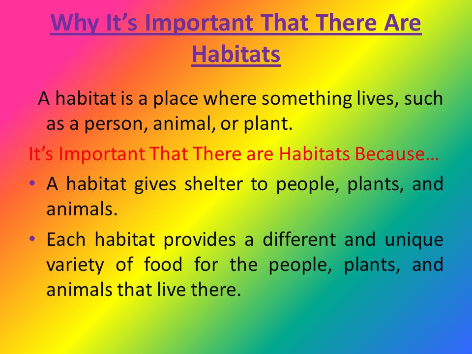 It's Important To Have A Variety of Habitats Different plants and animals need certain conditions to live in.
