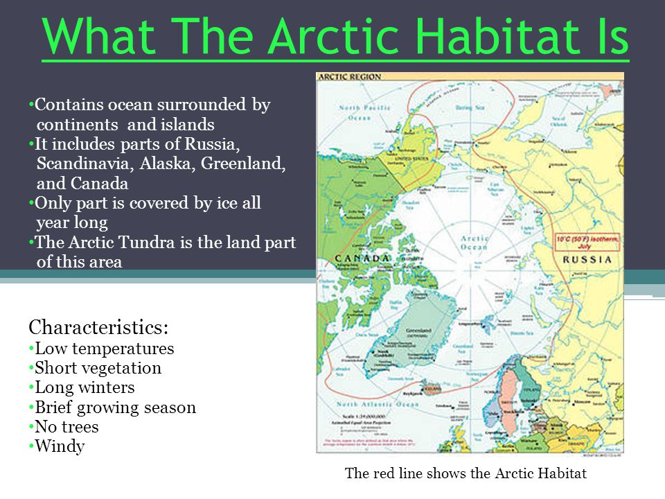 The Arctic Tundra is very cold.The average temperature is -30 C, but it often goes down to -60 C.