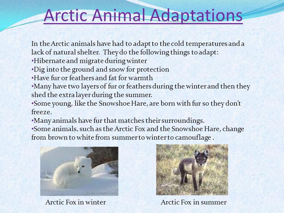 Pictures Of Arctic Animals