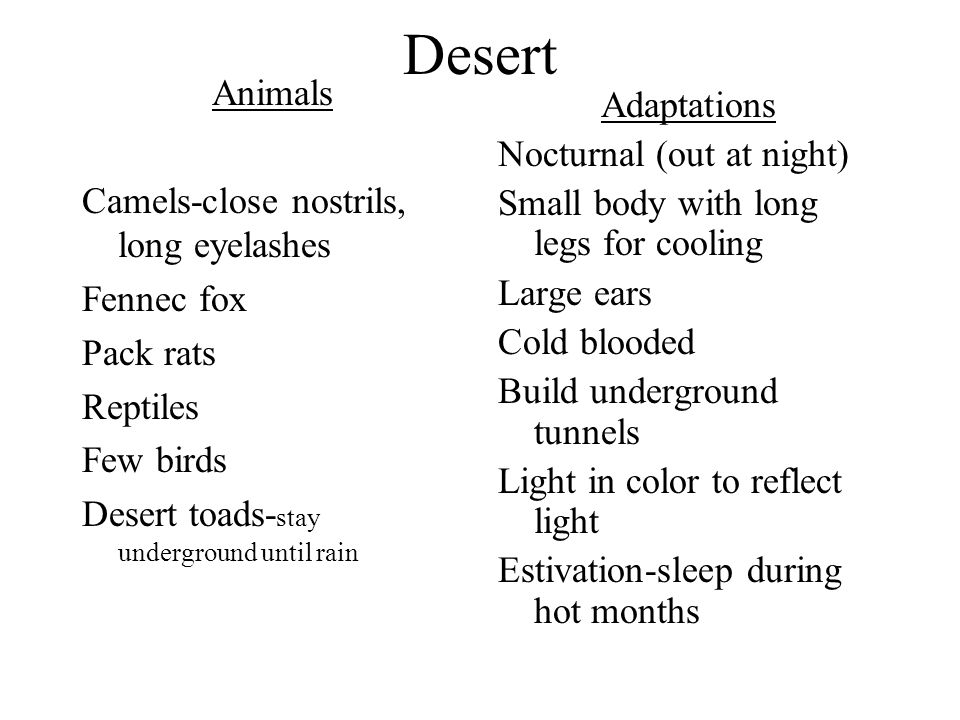 Desert Animals Camels-close nostrils, long eyelashes Fennec fox Pack rats Reptiles Few birds Desert toads- stay underground until rain Adaptations Noc