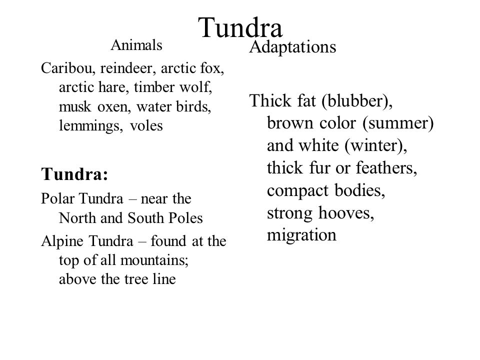 Tundra Animals Caribou, reindeer, arctic fox, arctic hare, timber wolf, musk oxen, water birds, lemmings, voles Tundra: Polar Tundra – near the North
