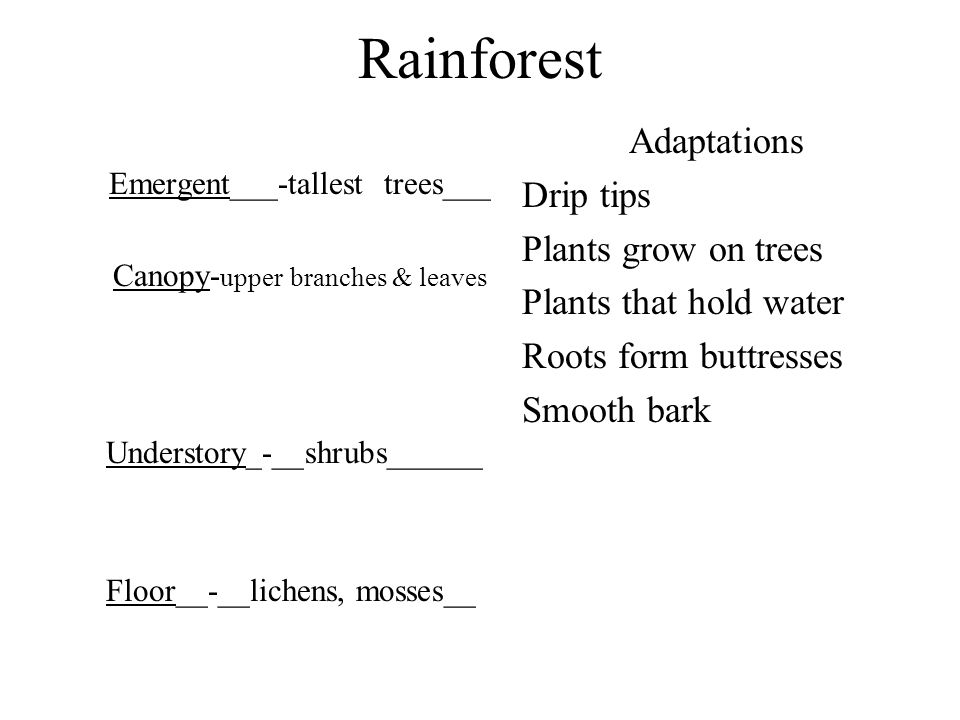 Rainforest Emergent___-tallest trees___ Canopy- upper branches & leaves Understory_-__shrubs______ Floor__-__lichens, mosses__ Adaptations Drip tips P