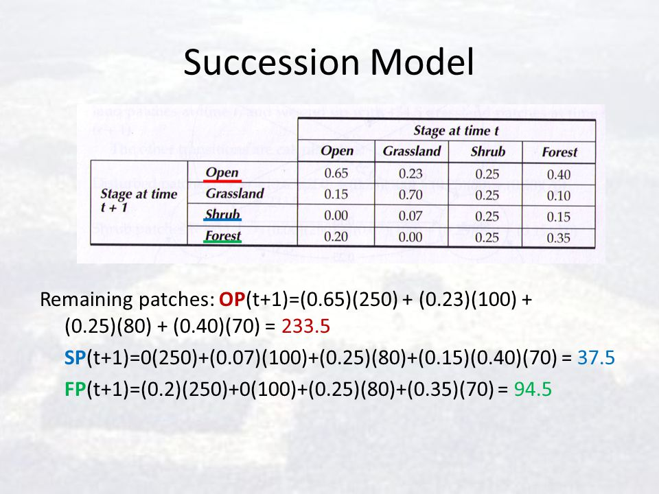 Succession Model Remaining patches: OP(t+1)=(0.65)(250) + (0.23)(100) + (0.25)(80) + (0.40)(70) = 233.5 SP(t+1)=0(250)+(0.07)(100)+(0.25)(80)+(0.15)(0