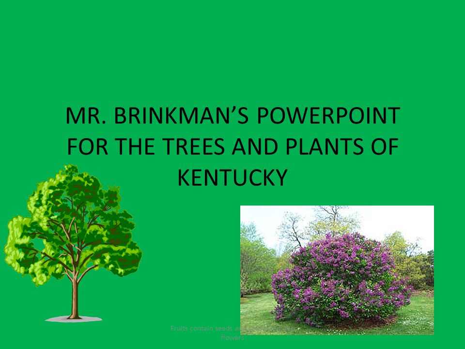 MR. BRINKMAN'S POWERPOINT FOR THE TREES AND PLANTS OF KENTUCKY Fruits contain seeds and come from the flowers