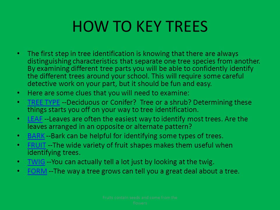 HOW TO KEY TREES The first step in tree identification is knowing that there are always distinguishing characteristics that separate one tree species from another.