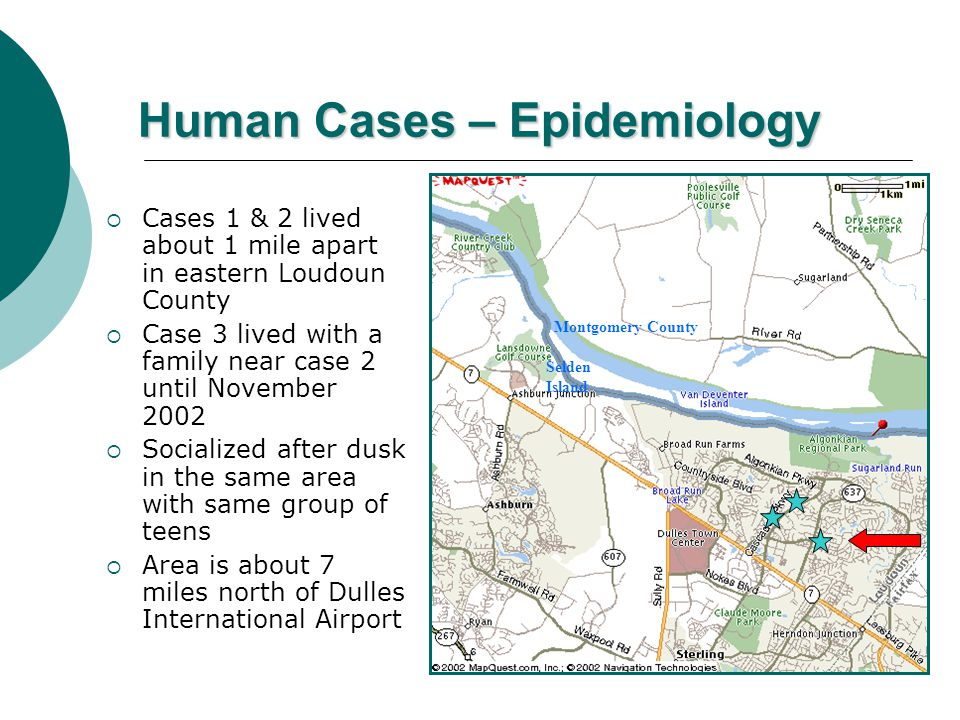 Human Cases – Epidemiology  Cases 1 & 2 lived about 1 mile apart in eastern Loudoun County  Case 3 lived with a family near case 2 until November 2002  Socialized after dusk in the same area with same group of teens  Area is about 7 miles north of Dulles International Airport Selden Island Montgomery County