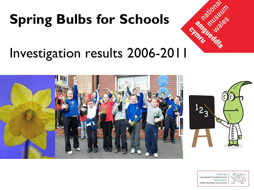 Spring Bulbs for Schools Investigation results 2006-2011