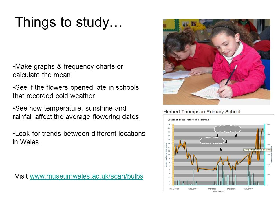 Things to study… Visit www.museumwales.ac.uk/scan/bulbswww.museumwales.ac.uk/scan/bulbs Make graphs & frequency charts or calculate the mean.