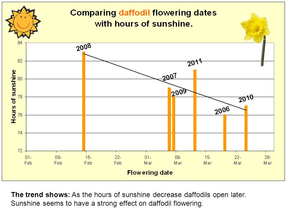 The trend shows: As the hours of sunshine decrease daffodils open later.