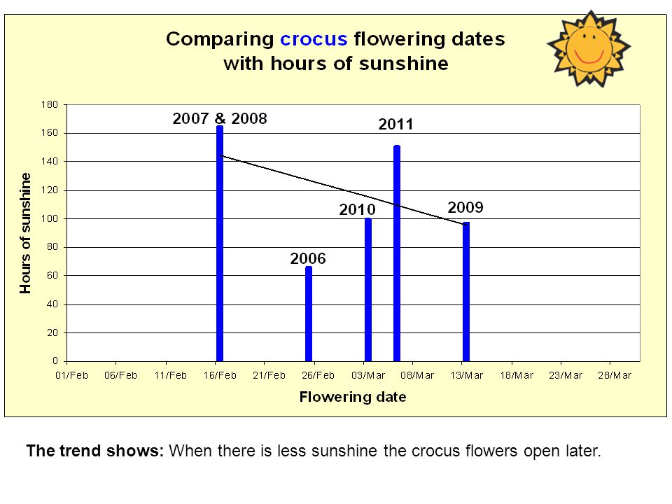 The trend shows: When there is less sunshine the crocus flowers open later.