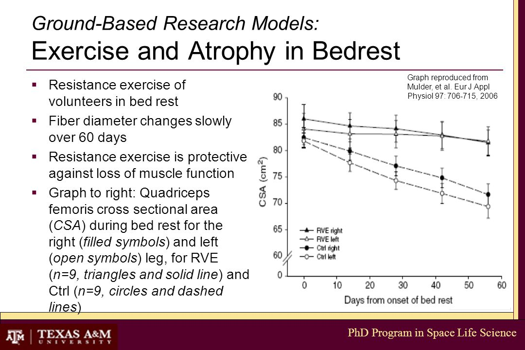PhD Program in Space Life Science Ground-Based Research Models: Exercise and Atrophy in Bedrest  Resistance exercise of volunteers in bed rest  Fiber diameter changes slowly over 60 days  Resistance exercise is protective against loss of muscle function  Graph to right: Quadriceps femoris cross sectional area (CSA) during bed rest for the right (filled symbols) and left (open symbols) leg, for RVE (n=9, triangles and solid line) and Ctrl (n=9, circles and dashed lines) Graph reproduced from Mulder, et al.