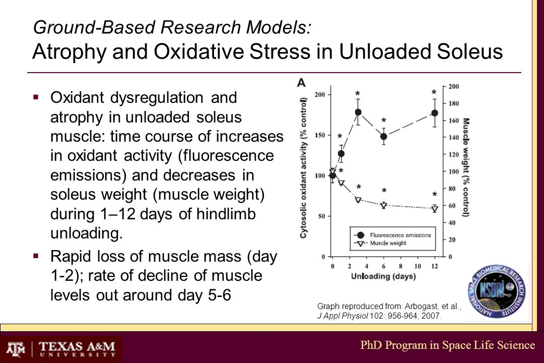 PhD Program in Space Life Science Ground-Based Research Models: Atrophy and Oxidative Stress in Unloaded Soleus  Oxidant dysregulation and atrophy in unloaded soleus muscle: time course of increases in oxidant activity (fluorescence emissions) and decreases in soleus weight (muscle weight) during 1–12 days of hindlimb unloading.