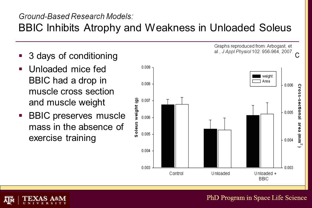 PhD Program in Space Life Science Ground-Based Research Models: BBIC Inhibits Atrophy and Weakness in Unloaded Soleus  3 days of conditioning  Unloaded mice fed BBIC had a drop in muscle cross section and muscle weight  BBIC preserves muscle mass in the absence of exercise training Graphs reproduced from: Arbogast, et al., J Appl Physiol 102: 956-964, 2007.
