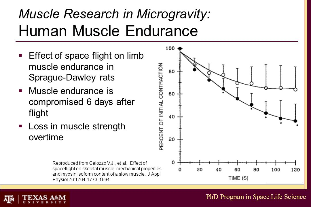 PhD Program in Space Life Science Muscle Research in Microgravity: Human Muscle Endurance  Effect of space flight on limb muscle endurance in Sprague-Dawley rats  Muscle endurance is compromised 6 days after flight  Loss in muscle strength overtime Reproduced from Caiozzo V.J., et al.