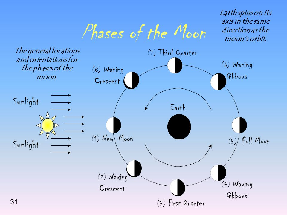 Phases of the Moon Sunlight (1) New Moon (2) Waxing Crescent (3) First Quarter (4) Waxing Gibbous (5) Full Moon (6) Waning Gibbous (7) Third Quarter (8) Waning Crescent Earth The general locations and orientations for the phases of the moon.