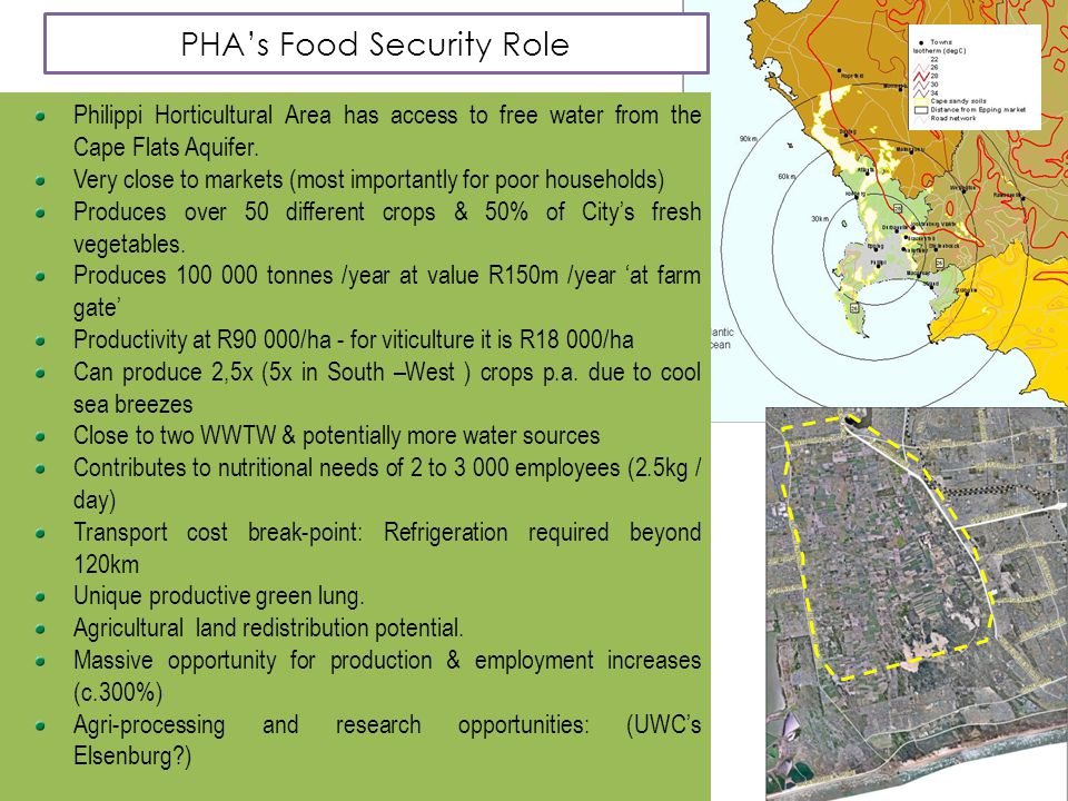 PHA's Food Security Role Philippi Horticultural Area has access to free water from the Cape Flats Aquifer. Very close to markets (most importantly for