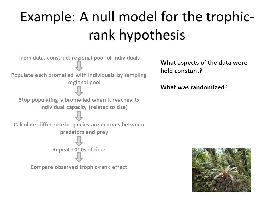 Example: A null model for the trophic- rank hypothesis From data, construct regional pool of individuals Populate each bromeliad with individuals by s
