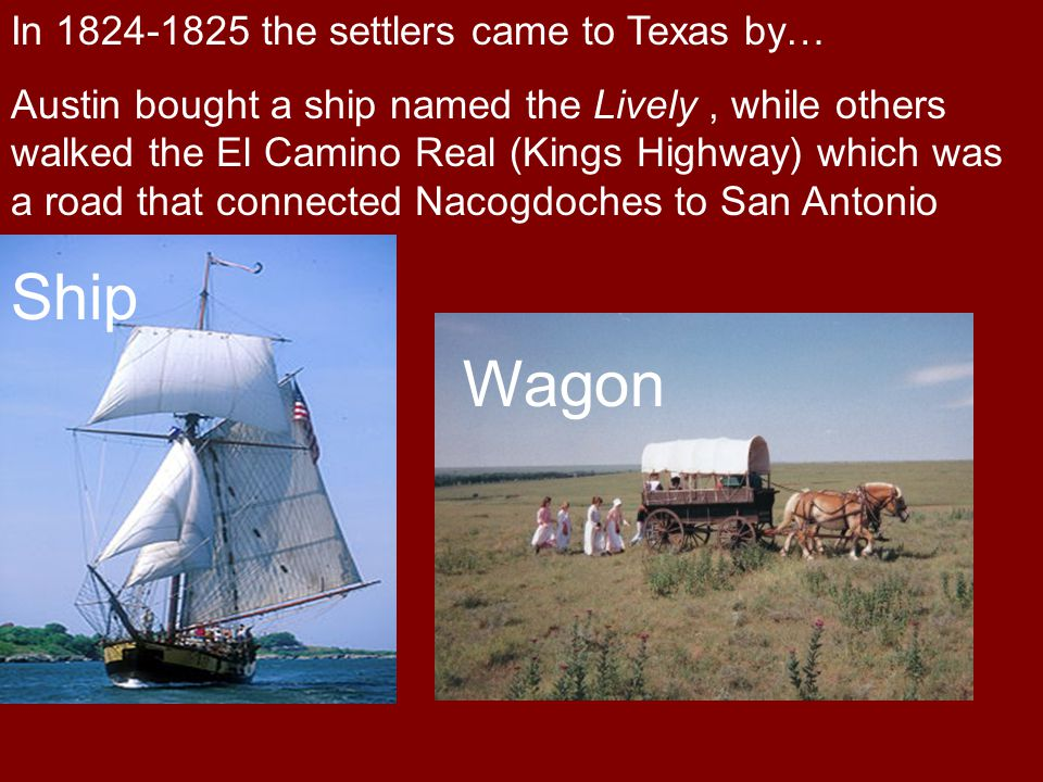 In 1824-1825 the settlers came to Texas by… Austin bought a ship named the Lively, while others walked the El Camino Real (Kings Highway) which was a