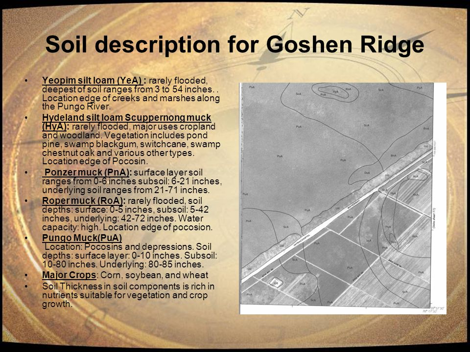 Soil description for Goshen Ridge Yeopim silt loam (YeA) : rarely flooded, deepest of soil ranges from 3 to 54 inches.. Location edge of creeks and ma