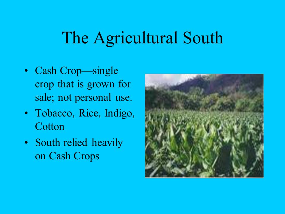 The Agricultural South Cash Crop—single crop that is grown for sale; not personal use.
