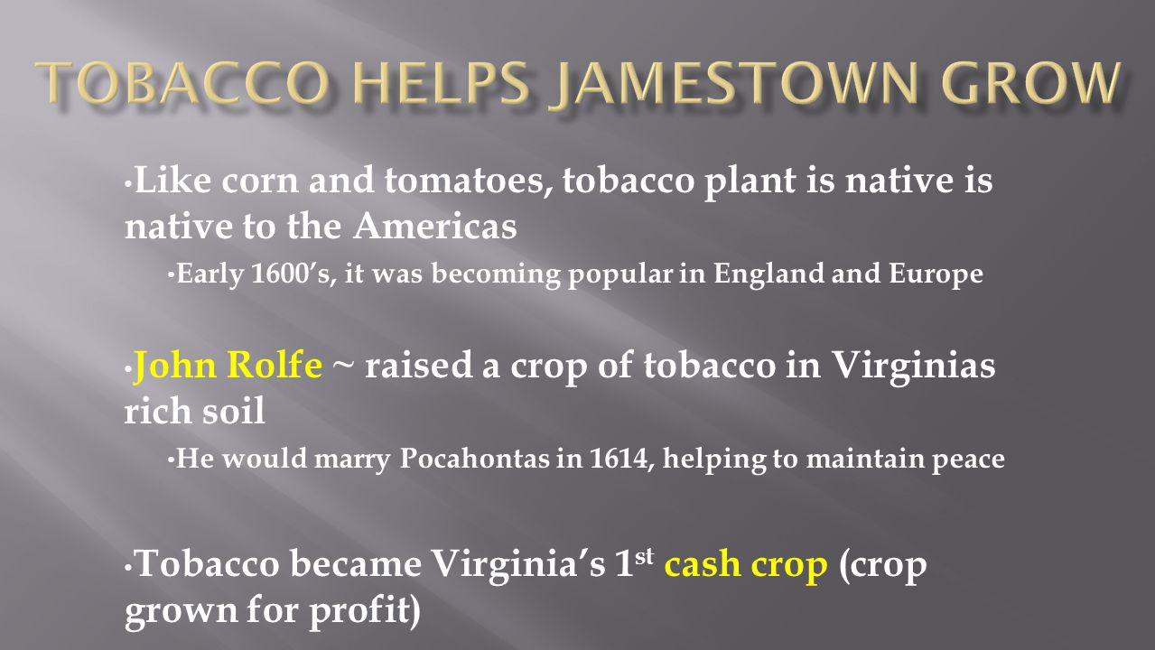 Like corn and tomatoes, tobacco plant is native is native to the Americas Early 1600's, it was becoming popular in England and Europe John Rolfe ~ rai