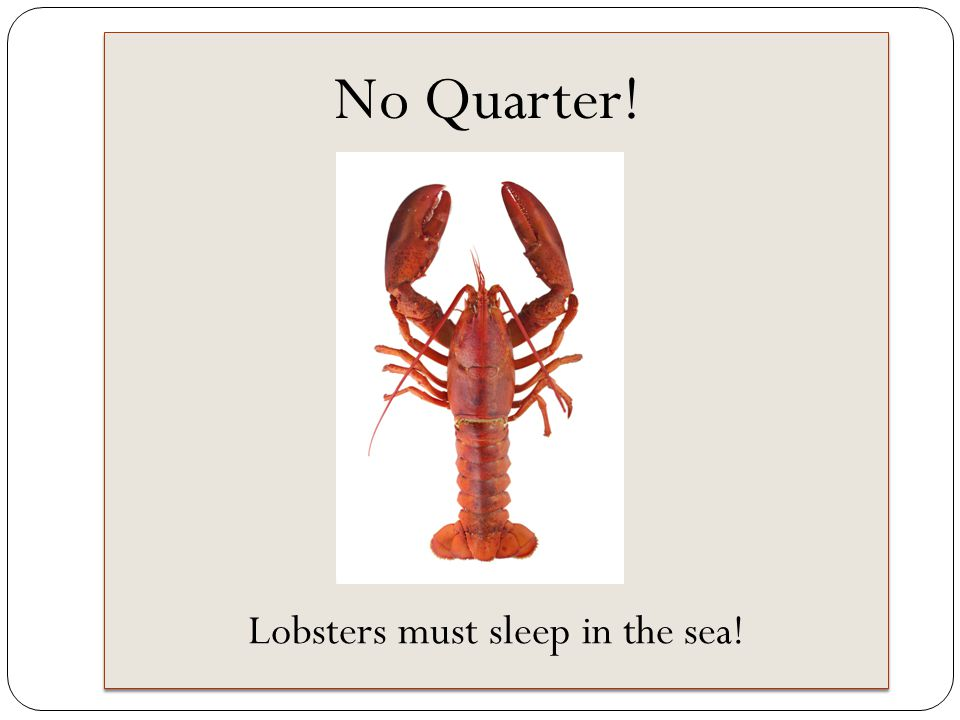 No Quarter! Lobsters must sleep in the sea!