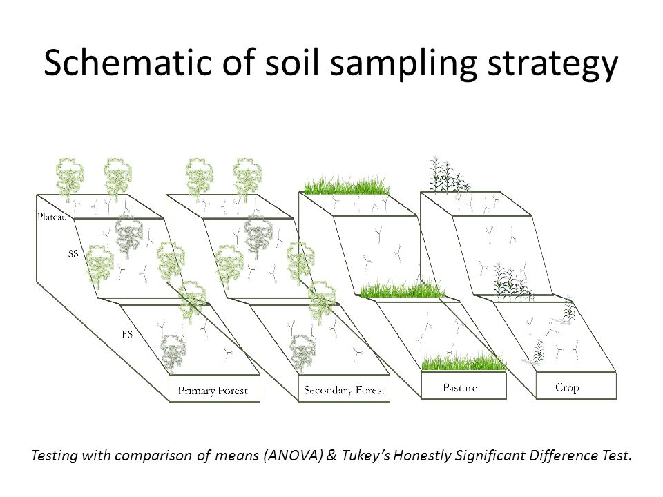 Schematic of soil sampling strategy Testing with comparison of means (ANOVA) & Tukey's Honestly Significant Difference Test.