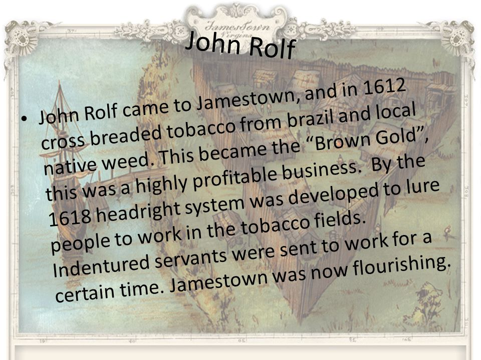 John Rolf John Rolf came to Jamestown, and in 1612 cross breaded tobacco from brazil and local native weed.