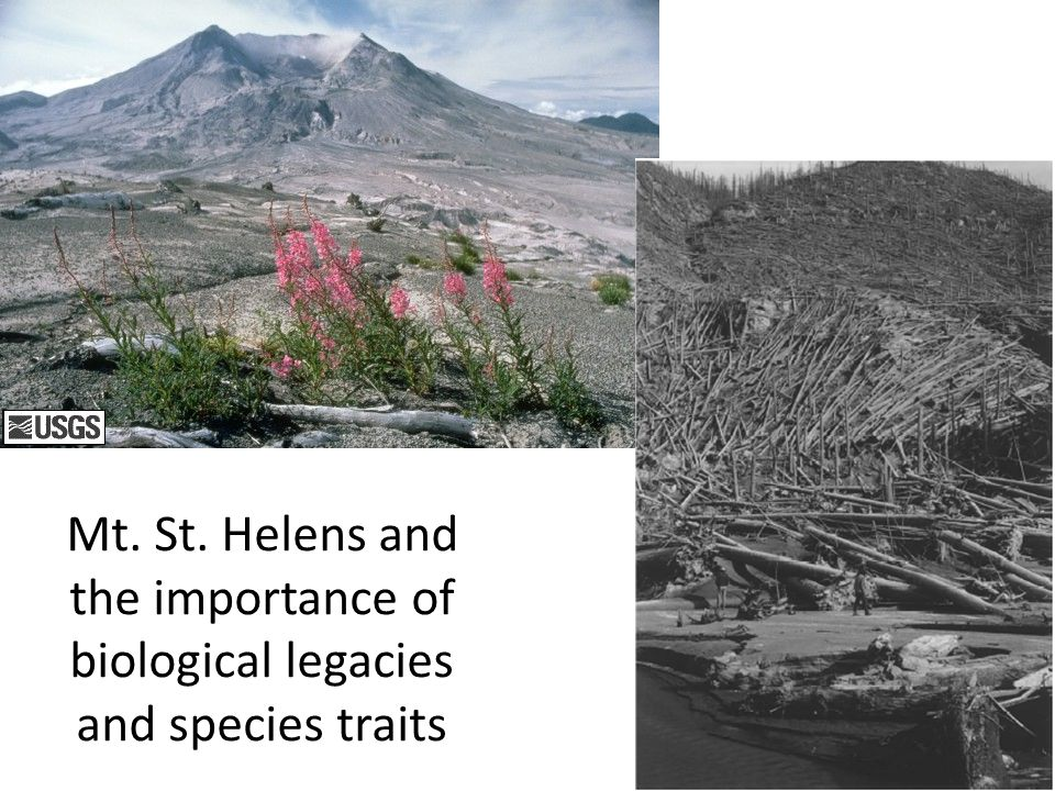 Mt. St. Helens and the importance of biological legacies and species traits