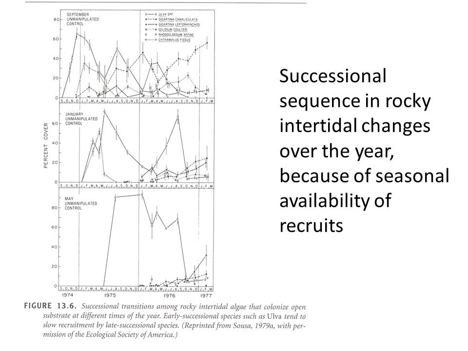 Successional sequence in rocky intertidal changes over the year, because of seasonal availability of recruits