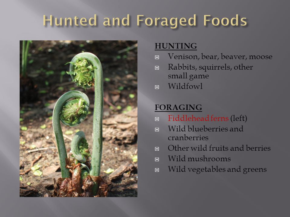 HUNTING  Venison, bear, beaver, moose  Rabbits, squirrels, other small game  Wildfowl FORAGING  Fiddlehead ferns (left)  Wild blueberries and cranberries  Other wild fruits and berries  Wild mushrooms  Wild vegetables and greens