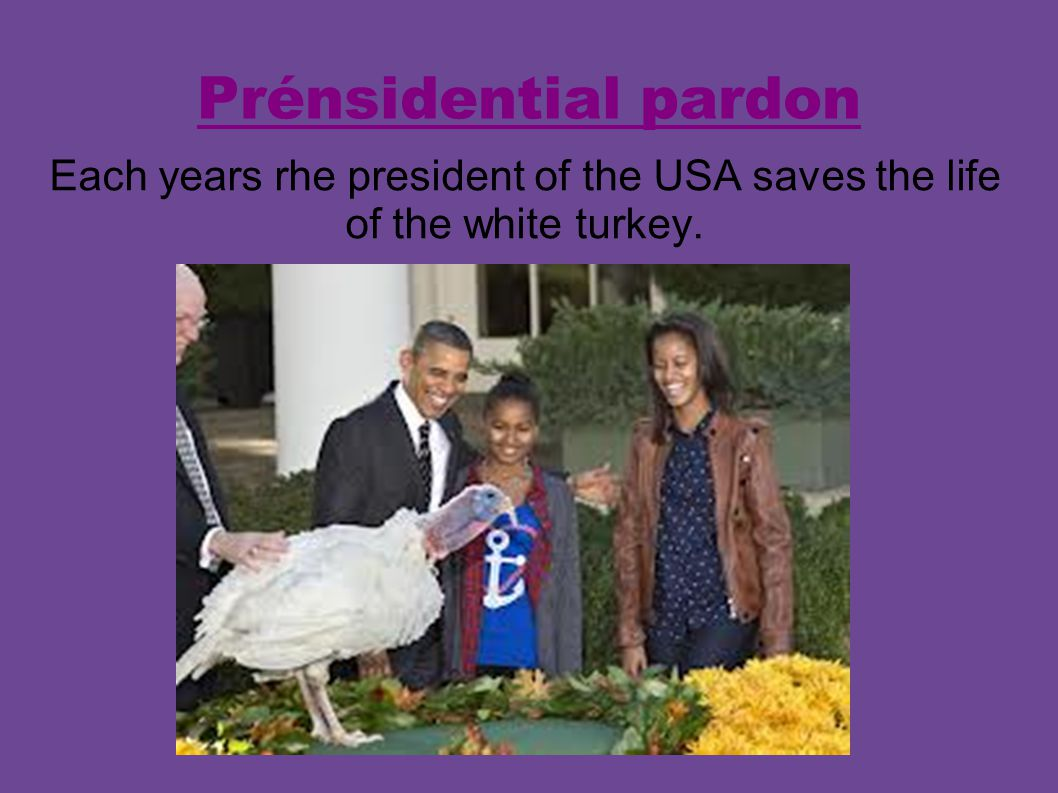 Prénsidential pardon Each years rhe president of the USA saves the life of the white turkey.