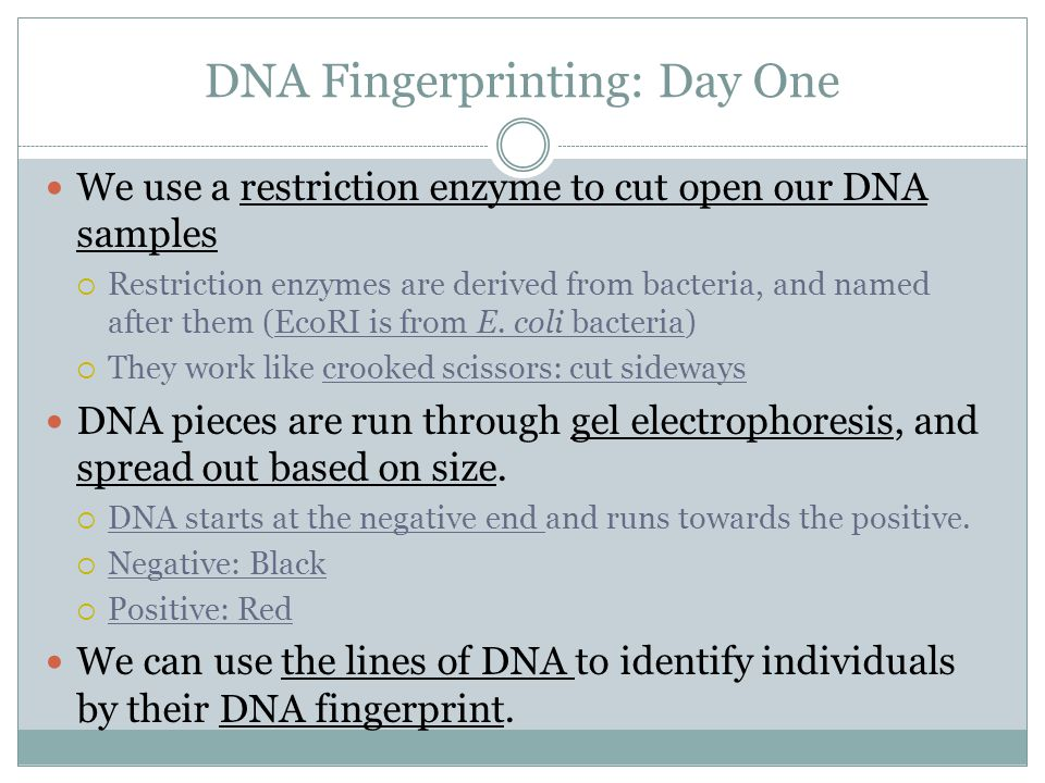 Tools And Techniques Dna Fingerprinting Intoducing The Microliter
