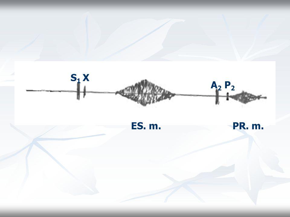 S 1 X ES. m. A 2 P 2 PR. m.