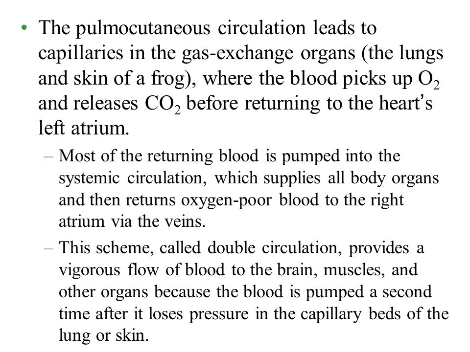 The pulmocutaneous circulation leads to capillaries in the gas-exchange organs (the lungs and skin of a frog), where the blood picks up O 2 and releas