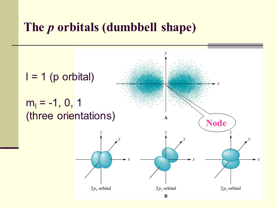 31 The p orbitals (dumbbell shape) Node l = 1 (p orbital) m l = -1, 0, 1 (three orientations)
