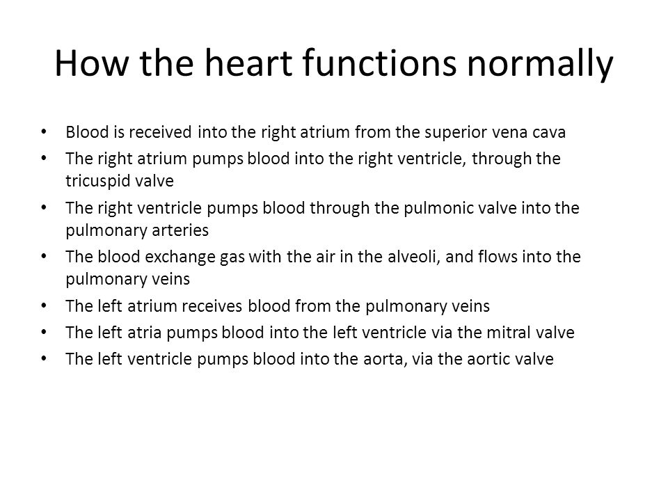 How the heart functions normally Blood is received into the right atrium from the superior vena cava The right atrium pumps blood into the right ventricle, through the tricuspid valve The right ventricle pumps blood through the pulmonic valve into the pulmonary arteries The blood exchange gas with the air in the alveoli, and flows into the pulmonary veins The left atrium receives blood from the pulmonary veins The left atria pumps blood into the left ventricle via the mitral valve The left ventricle pumps blood into the aorta, via the aortic valve