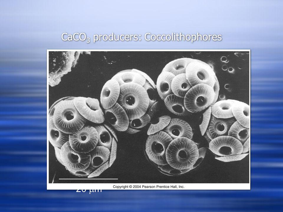 CaCO 3 producers: Coccolithophores 20  m