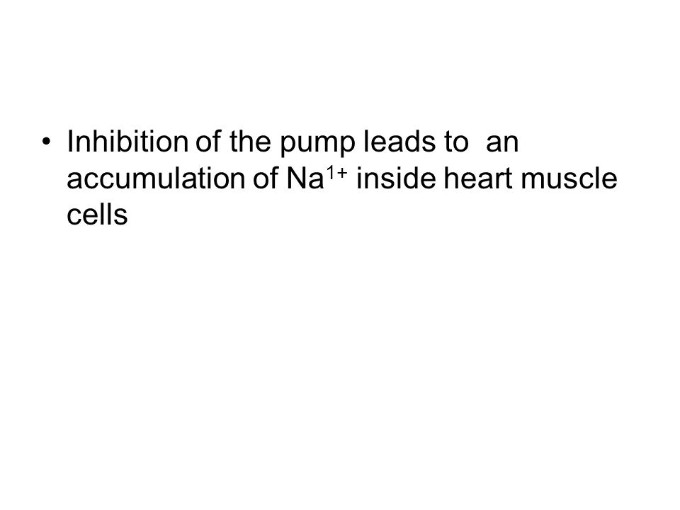 Inhibition of the pump leads to an accumulation of Na 1+ inside heart muscle cells