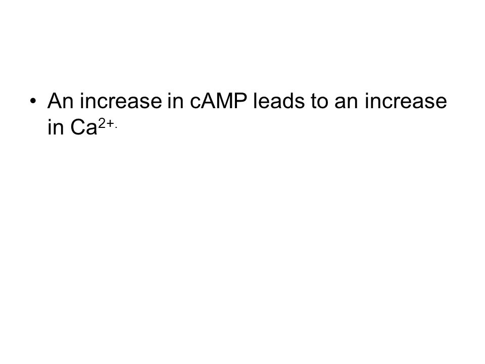 An increase in cAMP leads to an increase in Ca 2+.