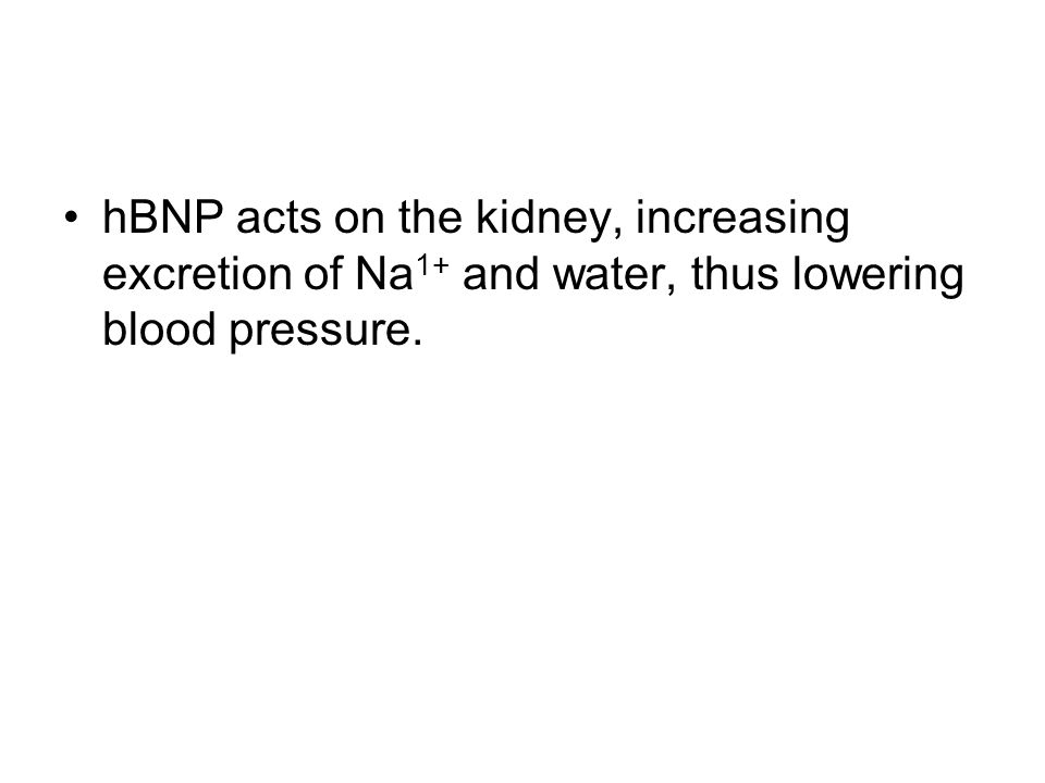 hBNP acts on the kidney, increasing excretion of Na 1+ and water, thus lowering blood pressure.